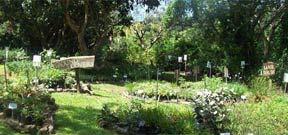 Khanyisa garden