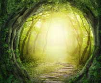 Dreaming, Psychoactive Plants & Healing